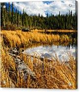 Golden Grass At Red Rocks Lake Acrylic Print