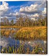 Golden Grasses Acrylic Print by Debra and Dave Vanderlaan