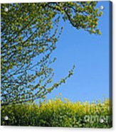 Golden Growing Season Acrylic Print