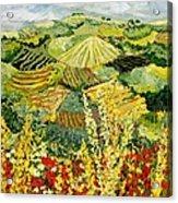 Golden Hedge Acrylic Print