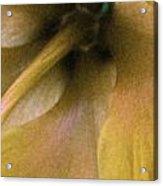 Golden Hibiscus 2616 Acrylic Print