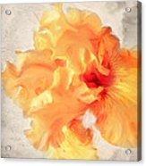 Golden Iris 2 Acrylic Print