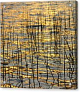 Golden Lake Ripples Acrylic Print by James BO  Insogna