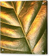 Golden Leaf 2 Acrylic Print