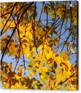 Golden Leaf Cascade Acrylic Print