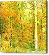 Golden Leaves  Acrylic Print by Dianne  Lacourciere