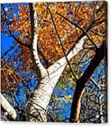 Golden Leaves II Acrylic Print