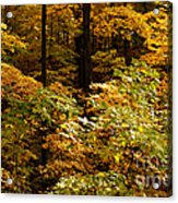 Golden Leaves In Autumn Acrylic Print