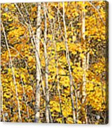 Golden Leaves In Autumn Abstract Acrylic Print