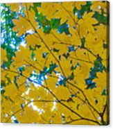 Golden Leaves Of Autumn Acrylic Print
