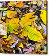 Golden Leaves Acrylic Print