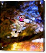 Golden Light Hummingbird Flight Acrylic Print