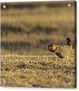 Golden Light On The Prairie Acrylic Print