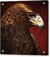 Golden Look Golden Eagle Acrylic Print