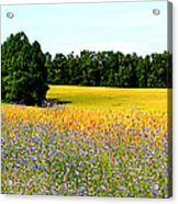 Golden Meadow Acrylic Print