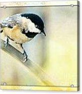 Golden Morning Chickadee Photo Art Acrylic Print