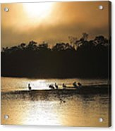 Golden Morning On Ding Darling Acrylic Print by Steven Ainsworth