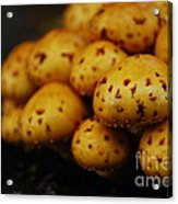 Golden Mushrooms Acrylic Print by Susan Hernandez