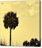 Golden Palm Silhouette Acrylic Print