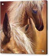 Golden Palomino Acrylic Print