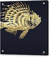 Golden Parrot Fish On Charcoal Black Acrylic Print