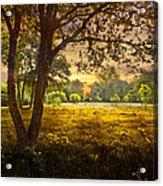 Golden Pastures Acrylic Print