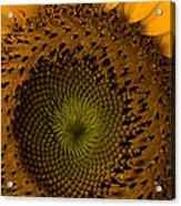 Golden Petals Acrylic Print