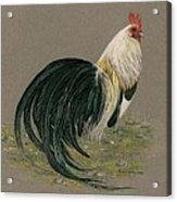 Golden Phoenix Rooster Acrylic Print
