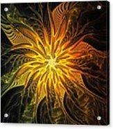 Golden Poinsettia Acrylic Print