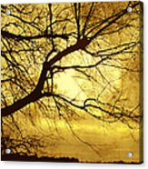 Golden Pond Acrylic Print by Ann Powell