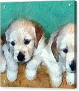 Golden Puppies Acrylic Print