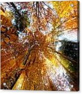 Golden Rays Acrylic Print