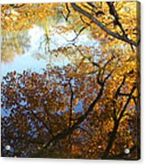 Golden Reflection Acrylic Print