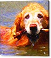 Golden Retriever - Painterly Acrylic Print