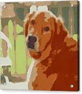 Golden Retriever Profile Acrylic Print