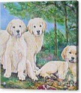 Golden Retriever Puppy Trio  Acrylic Print