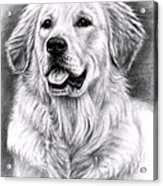 Golden Retriever Spence Acrylic Print