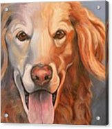 Golden Retriever Till There Was You Acrylic Print