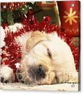 Golden Retriever Under Christmas Tree Acrylic Print