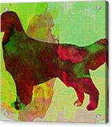 Golden Retriever Watercolor Acrylic Print