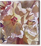 Golden Rhododendronfull Acrylic Print