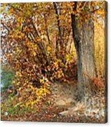 Golden Riverbank Acrylic Print