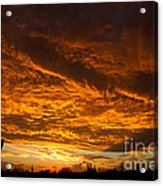 Golden Saguaro Acrylic Print