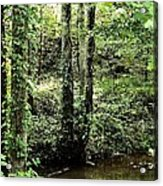 Golden Silence In The Forest Acrylic Print