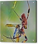 Golden Silk Orb With Blue Dragonfly Acrylic Print
