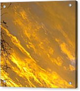 Golden Sky Acrylic Print by Andrea Dale