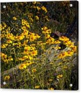 Golden Spring Flowers  Acrylic Print