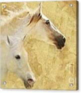 Golden Steeds Acrylic Print