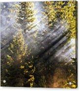 Golden Sunbeams Acrylic Print