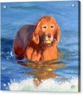Golden Sunset at Jetty Beach Acrylic Print